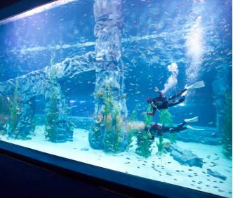 LOTTE WORLD + Aquarium 1Day Ticket